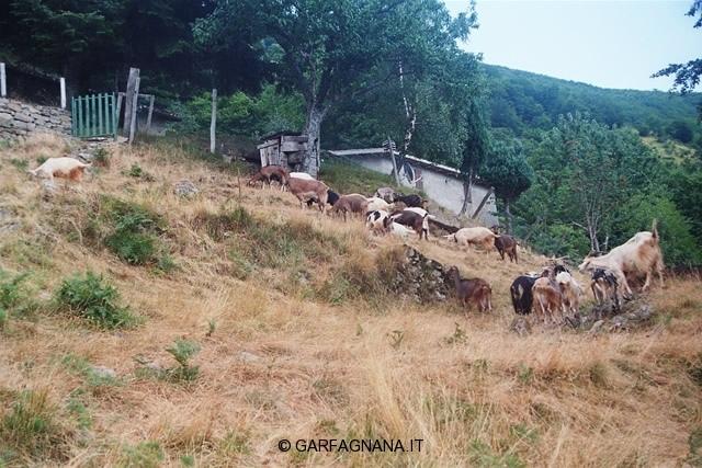 la-grecchia-55_jpg